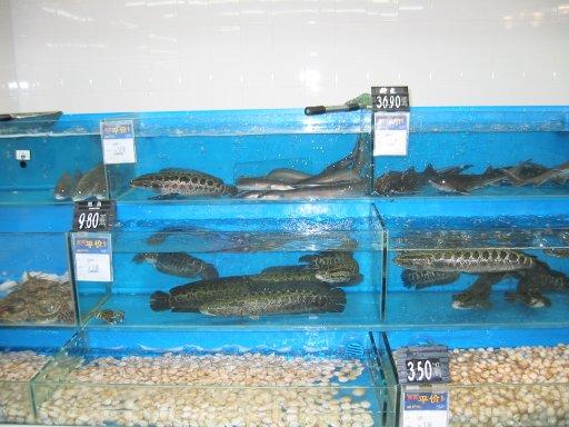 Joe kelly metrisin 39 s china vacation food for How much are fish at walmart